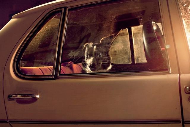 silence_dog_in_cars_01.jpg