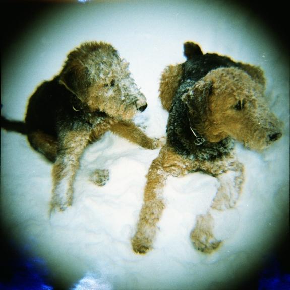snow_dogs.jpg