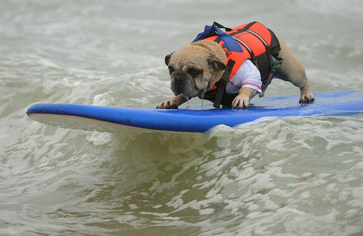 surfer-dog-deagan-rides-a-021.jpg