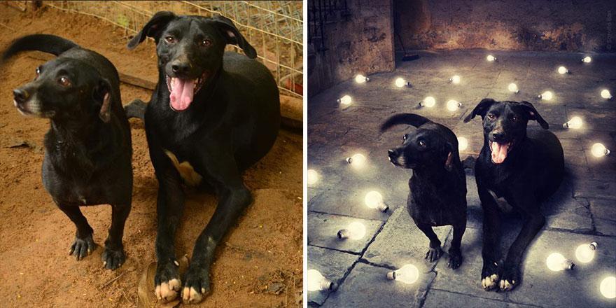 surreal-photography-shelter-dogs-sarolta-ban-10b.jpg