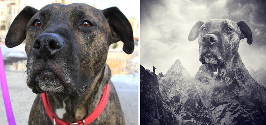 surreal-photography-shelter-dogs-sarolta-ban-1b.jpg