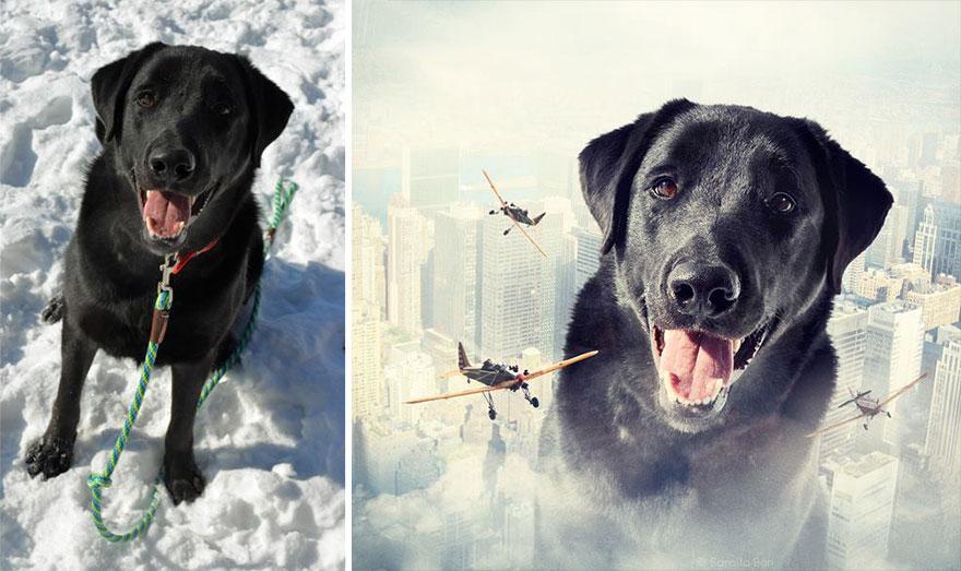 surreal-photography-shelter-dogs-sarolta-ban-2.jpg