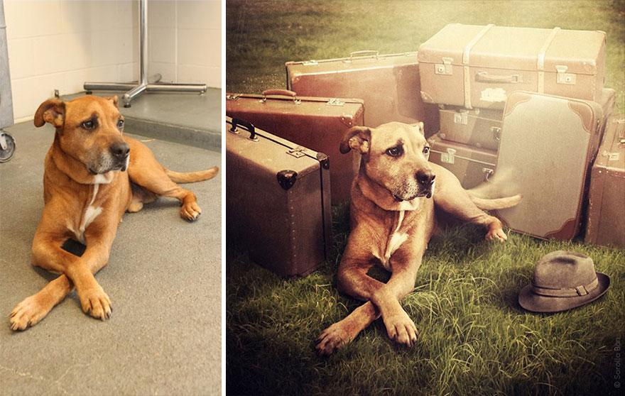 surreal-photography-shelter-dogs-sarolta-ban-3b.jpg