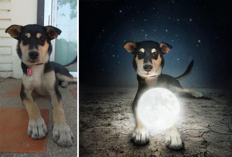 surreal-photography-shelter-dogs-sarolta-ban-4b.jpg