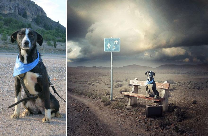 surreal-photography-shelter-dogs-sarolta-ban-5-b.jpg