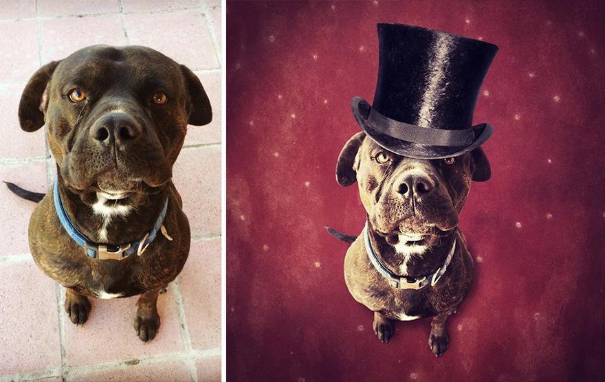 surreal-photography-shelter-dogs-sarolta-ban-7b.jpg