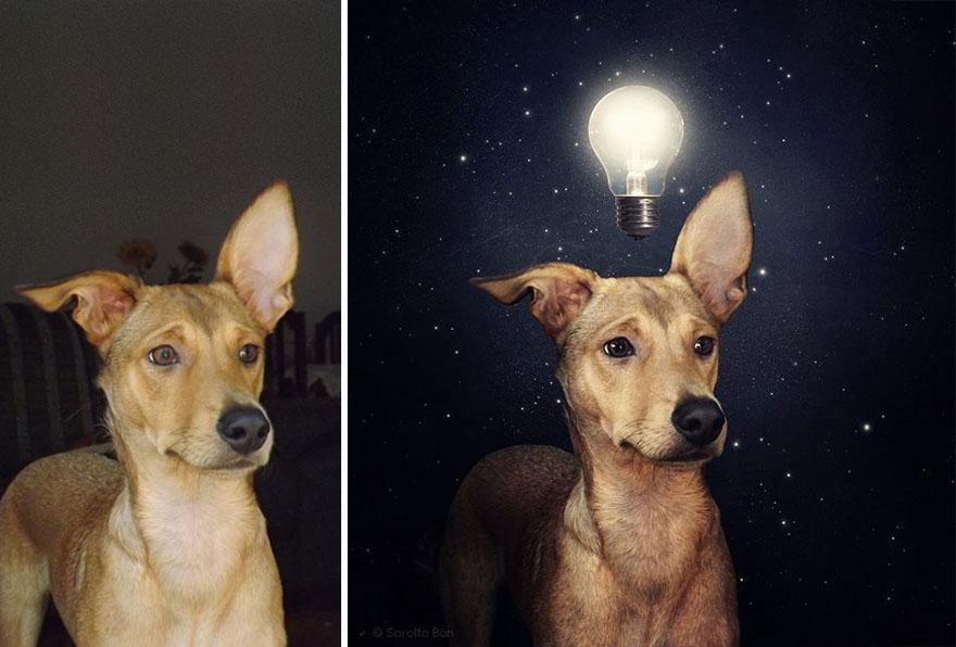 surreal-photography-shelter-dogs-sarolta-ban-9b.jpg