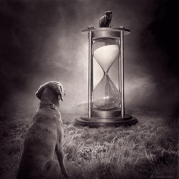 surreal-photoshop-images-shelter-animals-sarolta-ban-10.jpg
