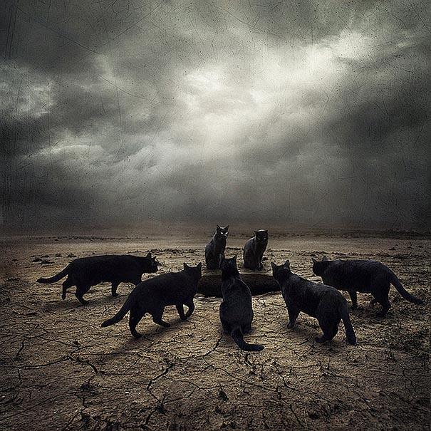 surreal-photoshop-images-shelter-animals-sarolta-ban-6.jpg