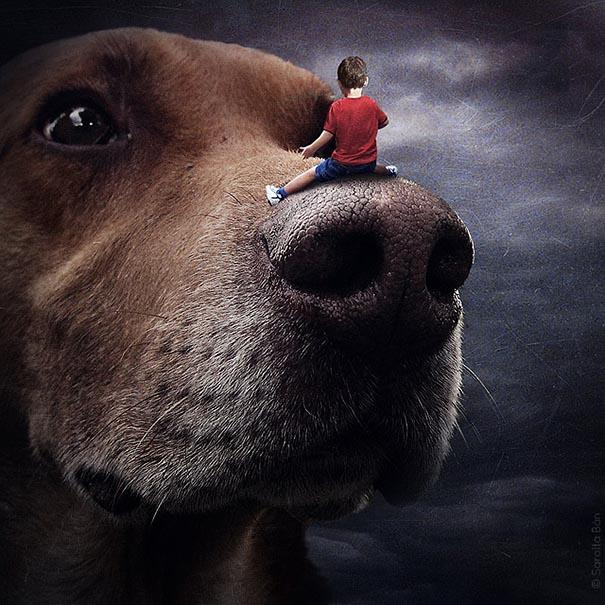 surreal-photoshop-images-shelter-animals-sarolta-ban-9.jpg