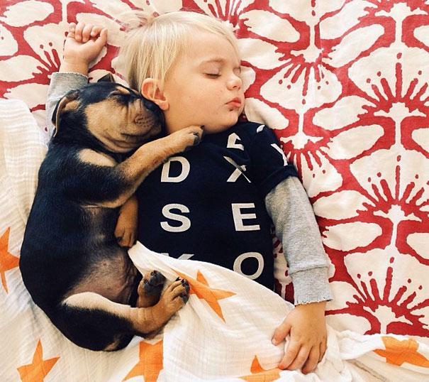 toddler-naps-with-puppy-theo-and-beau-14.jpg