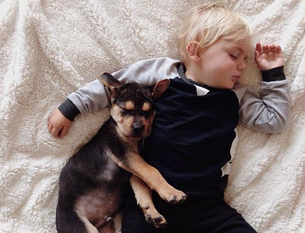 toddler-naps-with-puppy-theo-and-beau-15.jpg