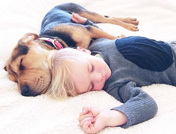 toddler-naps-with-puppy-theo-and-beau-2-17.jpg