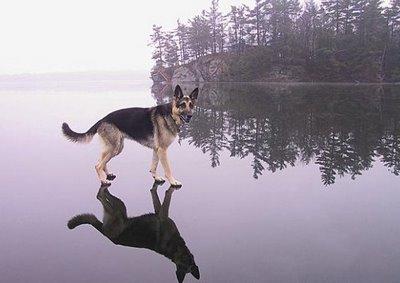 walkonwaterdog.jpg