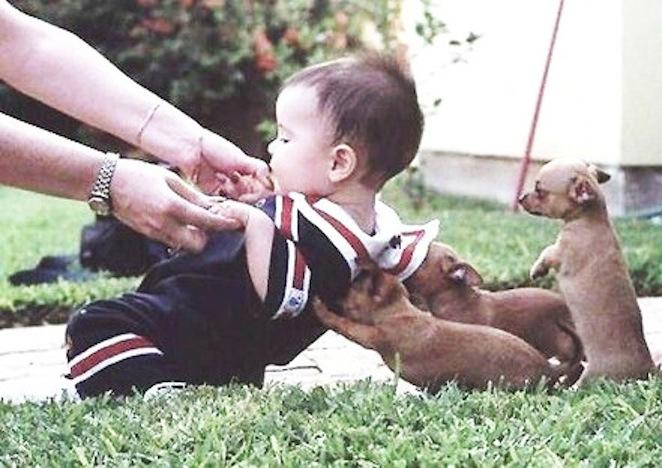 wr3mo-puppies-lifting-baby.jpg