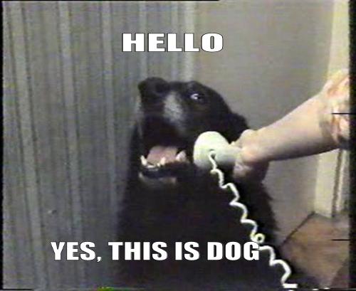 yesthisisdog.png