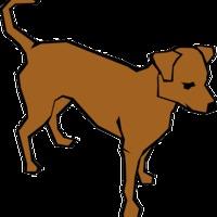 Kutya dolog ma Esztergomban gyepmesternek lenni