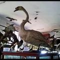 Kolozsvári Állattani Múzeum (Babes-Bolyai Tudományegyetem)