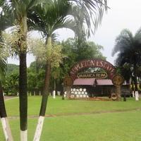 Jamaicai rumnapló