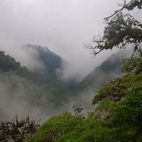 Felhőerdő