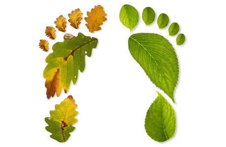 ecology7.jpg