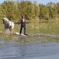 Balaton, kertészkedés, nyár...Májusi kedvenc munkák