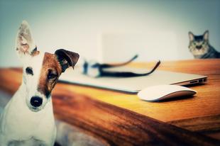 Ez állati! Kutyát az irodába?!