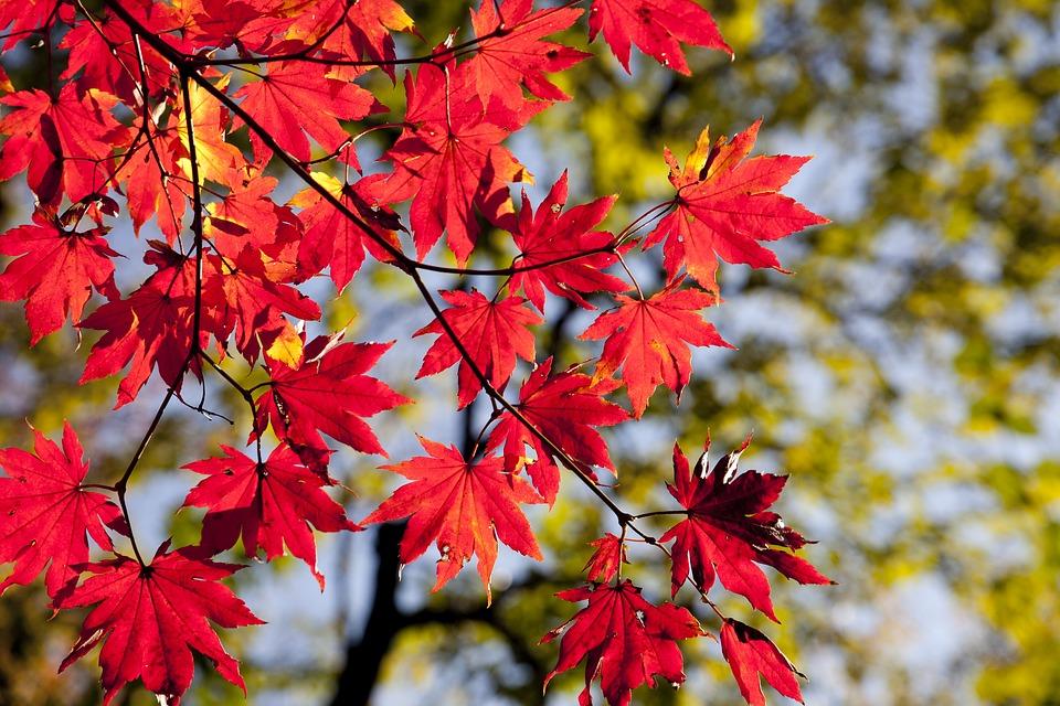 autumn-2789234_960_720.jpg
