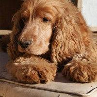 Stanley élni akar, segítséget kér – és tudja, hogy Rátok számíthat!