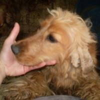 A Happy Dog Kutyaiskolában jártunk...