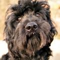 Kutya Talk Show! Mai témánk: Ne játssz tenyésztősdit avagy kitől vedd a kutyádat 3. rész