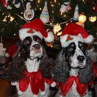 Kutyát karácsonyra NE VEGYETEK!