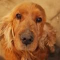 Haldokló kutya mellett ülni…