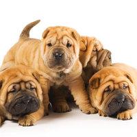 A Császár kutyája - avagy egy csodálatos történet csodálatos végkifejlettel