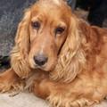 Kutya Talk Show! Mai témánk: Ne játssz tenyésztősdit - Avagy kitől vedd a kutyádat? 1 rész.