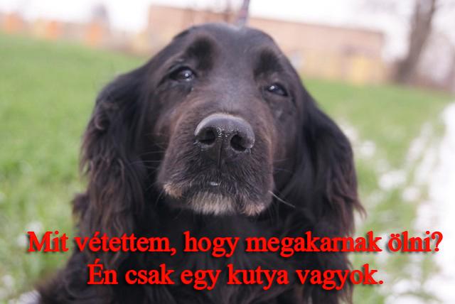 leona_felhivas.jpg