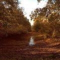 The times fly... Things change... I appreciate the time that I could spend with my lovers❤️ Repül az idő... A dolgok vàltoznak... Értèkelem az időt, amit a szeretteimmel tölthetek❤️ . . . #highleveljourney#timesflying#autumn#fall#winteriscoming#hellomagyarorszag#cozy#hygge#naturephotography#naturelovers