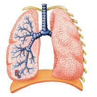 A légzési nehézségeken lehet segíteni!