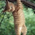 A macskák idegrendszere képes helyreállítani saját magát
