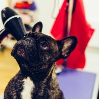 ohmyDOG boutique & spa - Ahol a kutyából nem lesz szalonna