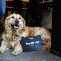 TOP 5 kutyabarát kávézó Budapesten, ahova minden időben betérhetsz