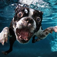 Kutyák a víz alatt