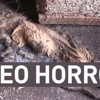 Paleo horror