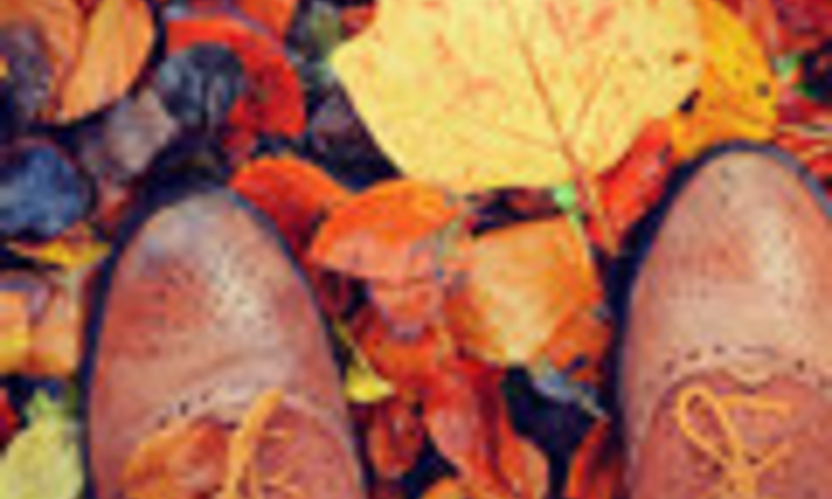 Helló November! - ködös reggelek, derűs programok