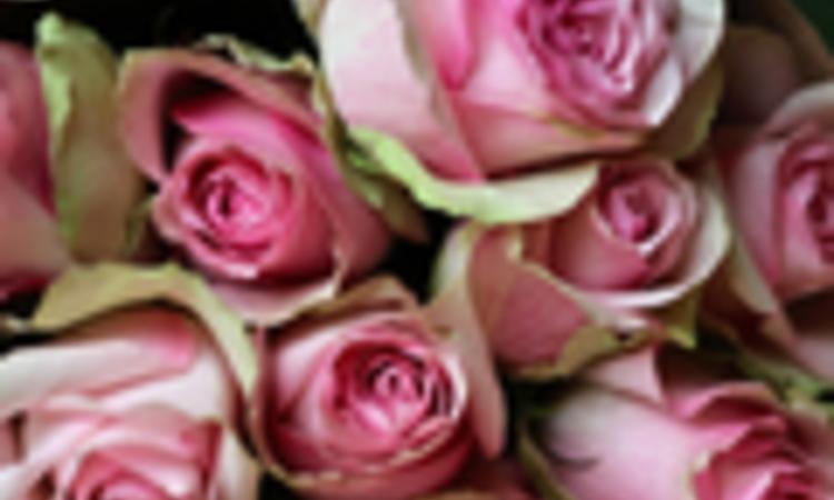 Rózsás hangulatban - Válogatás kedvenc rózsás termékeinkből