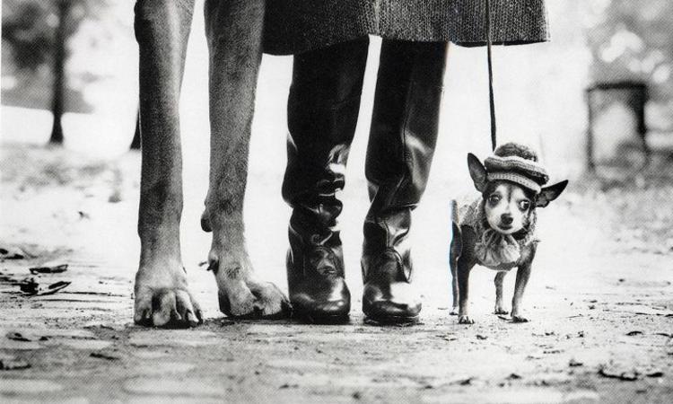 Ember a kutyában, kutya az emberben