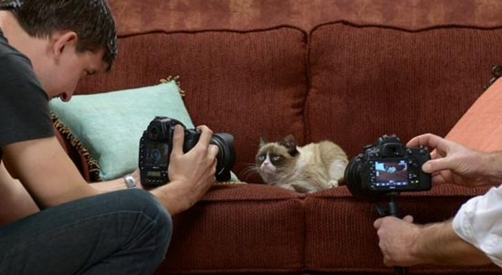 Grumpy-Cat-Set-to-Appear-in-Commercials-for-Friskies.jpg