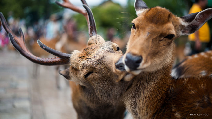 animal-couples-deer_880.jpg