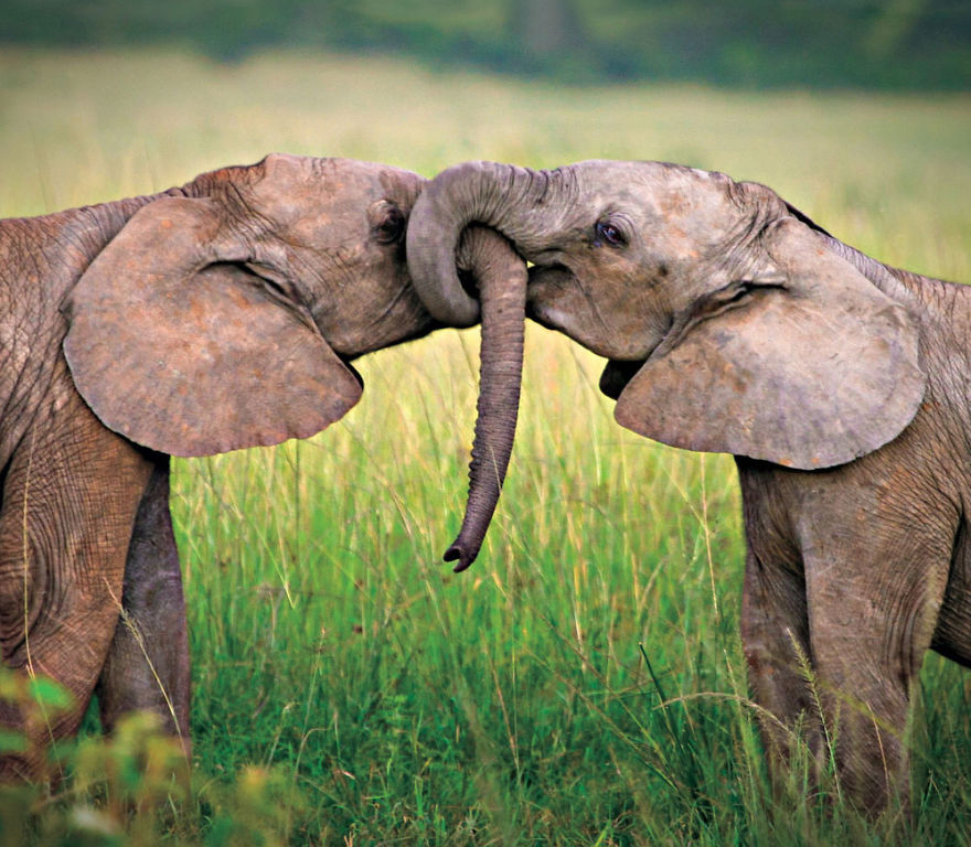 animal-couples-elephants_880.jpg
