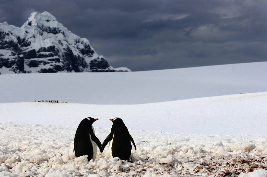 animal-couples-in-love-penguins_880.jpg